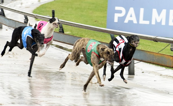 5 Tips to Identify a Winning  Bet for Greyhound Racing